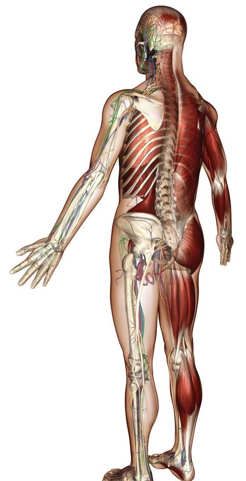 Manifestaciones musculares del déficit de DAO